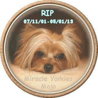 Yorkies, Yorkshire Terriers, Yorkie breeder NC, North